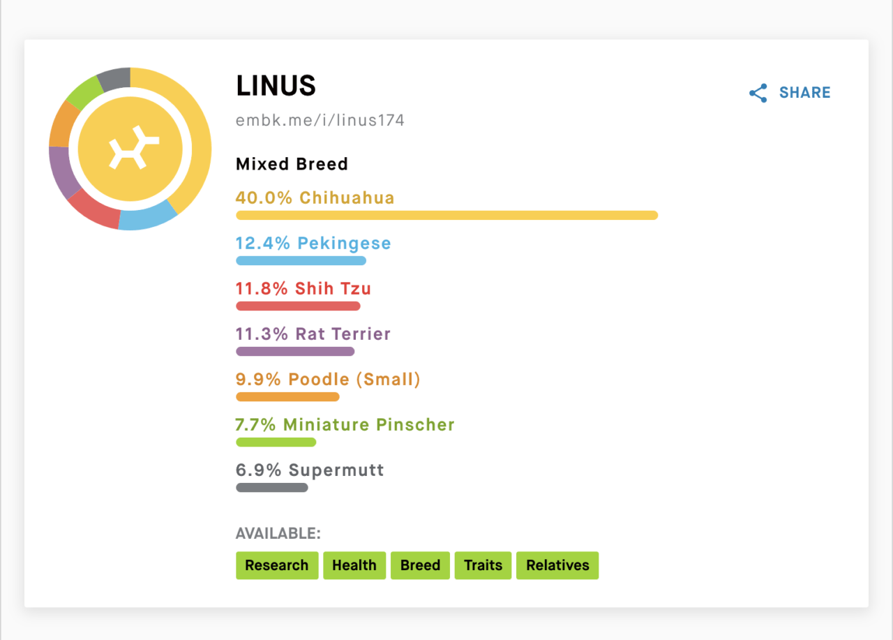 Embark DNA Test Results